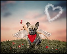 Cupid Ernie, Larbert
