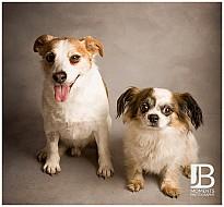 Charity Pet Shoot, Kincardine