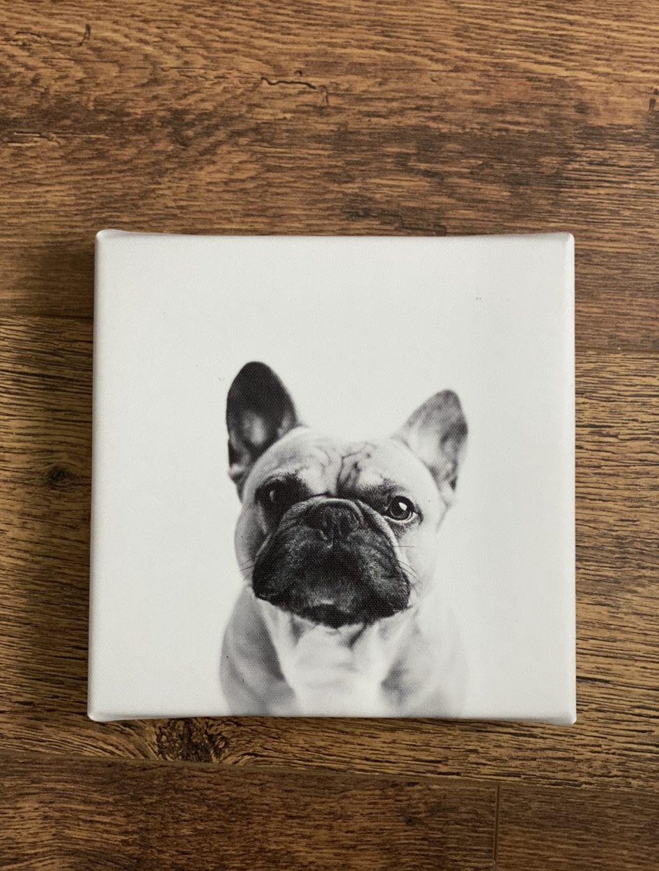 Pet Mugshots - JB Moments Photography