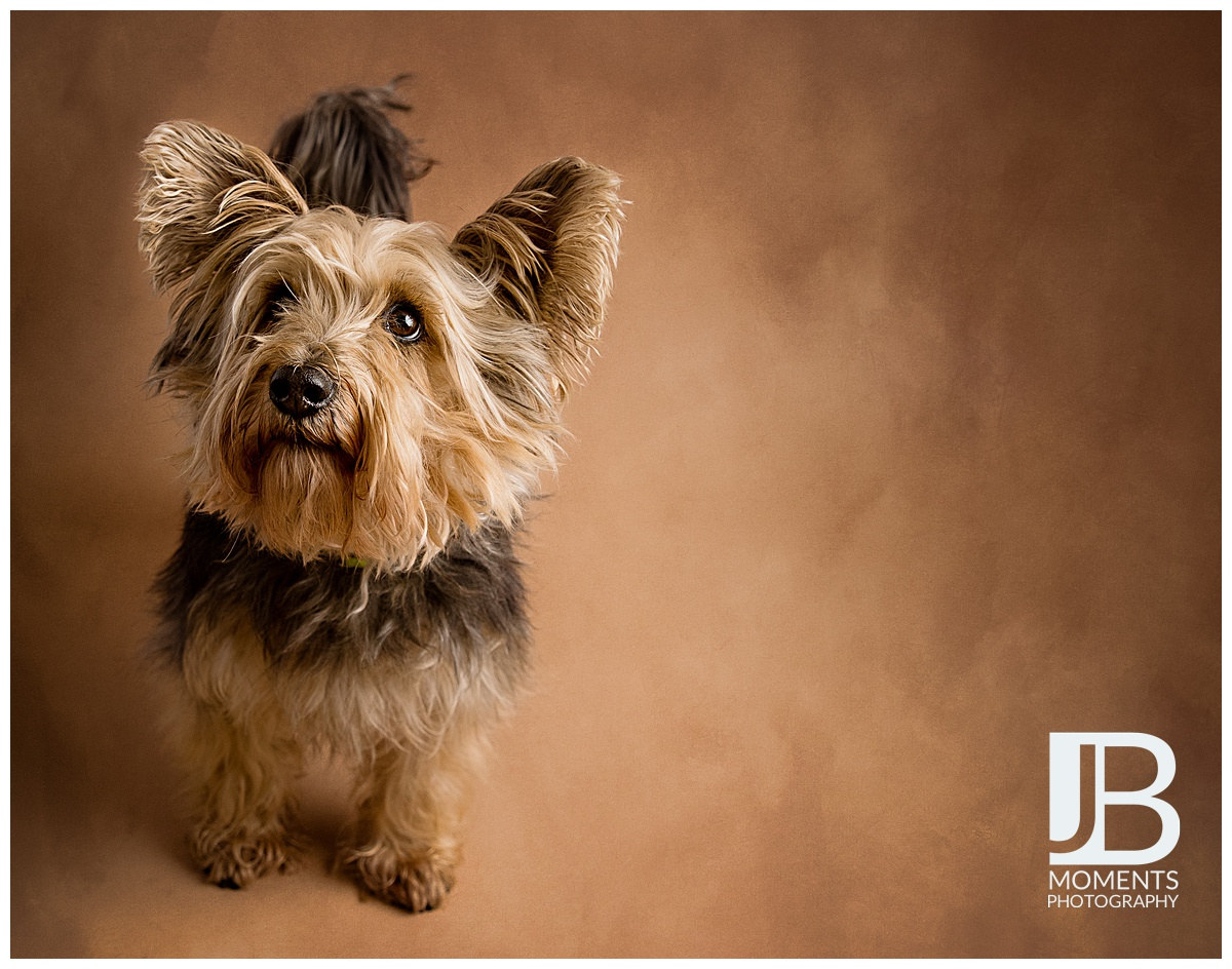 Pet Photos by JB Moments Photography