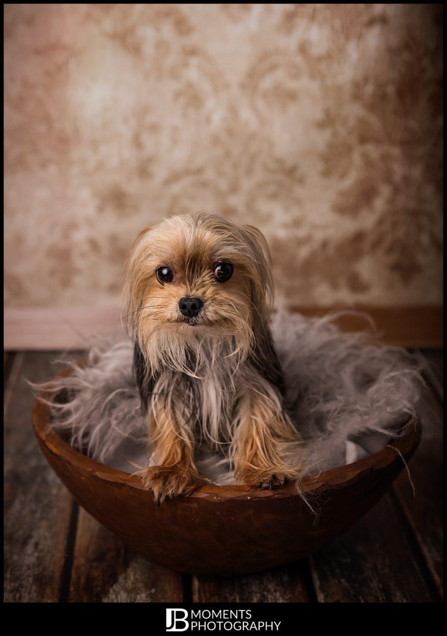 Pet Photographer - JB Moments Photography