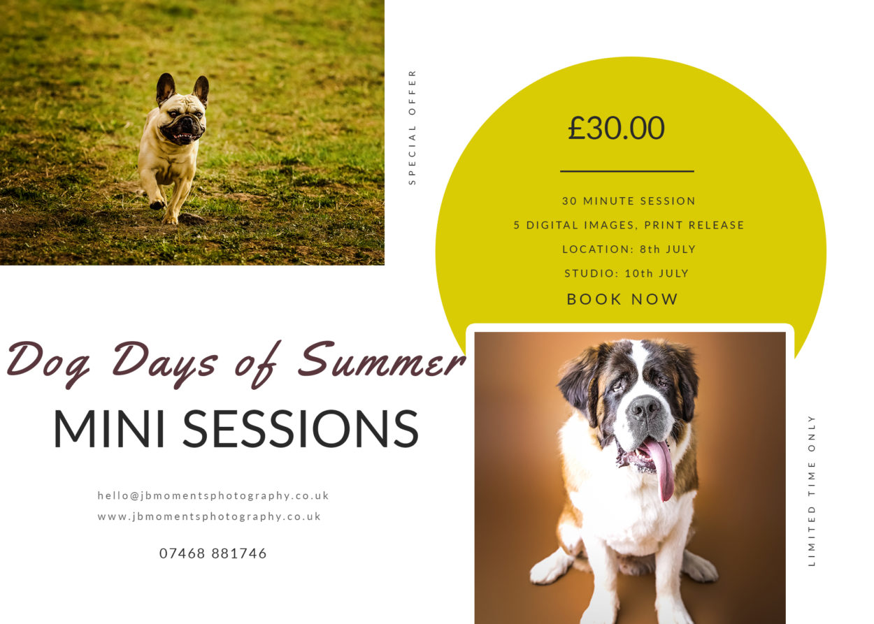 Dog Mini Sessions by JB Moments Photography